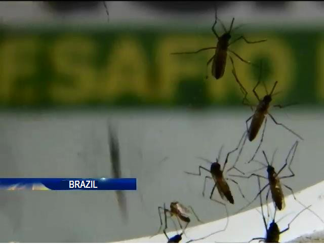 In Brazil, genetically modified mosquitoes will fight dengue