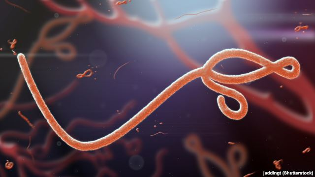 Ebola mortality increases to 70% - WHO