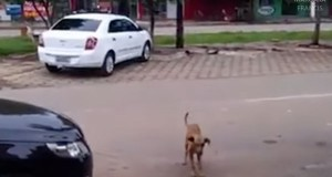 Dancing dog in Brazil