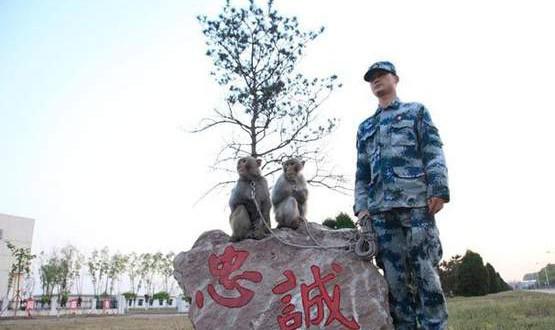 China's monkey squads