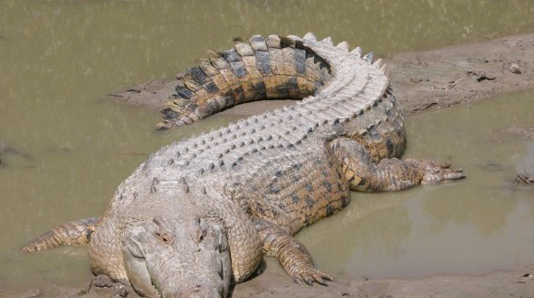 Indonesia plans to build a prison guarded by crocodiles