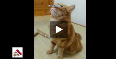 Watch this talented cat