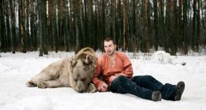 A big brown bear Stepan in Russian anti hunting company