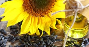 Ukraine increases production and export of sunflower oil