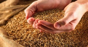 Ukraine sets a new grain export record