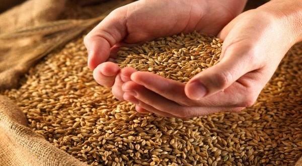 Ukraine sets a new grain export record