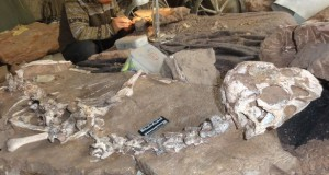 Fossilised remains of ancient dinosaur unearthed in China