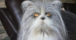 Is this cat or dog?