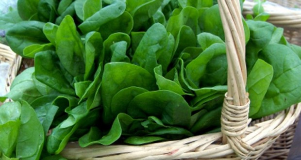 MIT scientists designed spinach to detect explosives