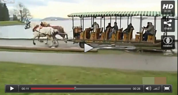 Spooked horses crash carriage in Canadian park - video