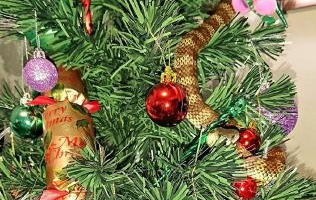 Australian family finds a snake on Christmas tree