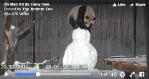 Video of the Day: Panda vs Snowman