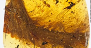 Unprecedented discovery: Sparrow-sized dinosaur tail found trapped in amber