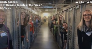 Animal shelter celebrates their empty kennels with a joyous video