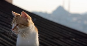 Watch trailer for documentary about seven stray cats in Istanbul streets