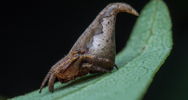Indian scientists name new spider species after Godric Gryffindor