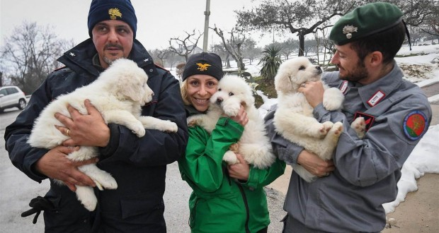 Puppies Found Alive Five Days After Deadly Italy Hotel Avalanche