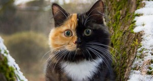 Meet this cute ginger-and-black cat who really likes to pose for pictures