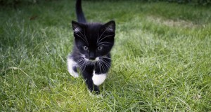 Cats are as smart as dogs - study