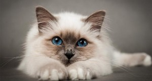 Cat diet: World's first lifestyle plan for cats developed