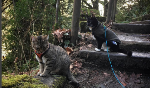 These two adventurous cats like climbing, running, hitching rides and even sledding