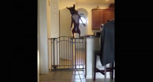 Watch this very good dog showing off her athletic prowess