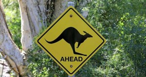 Australian jogger says 'lucky to be alive' after kangaroo attack