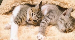 Cute Kittens Discover A Heated Foot Warmer For Winter