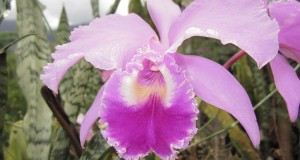 9 Reasons Not to Miss 72nd Annual Santa Barbara International Orchid Show