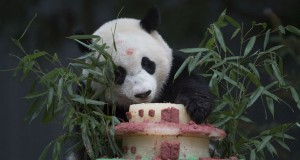 Washington zoo's giant panda Bao Bao to go back to China
