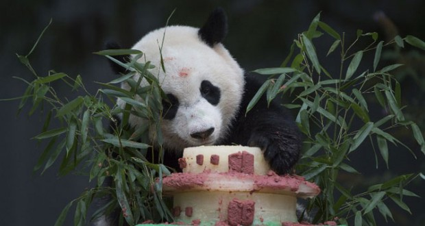 Washington zoo's giant panda Bao Bao to go back to China
