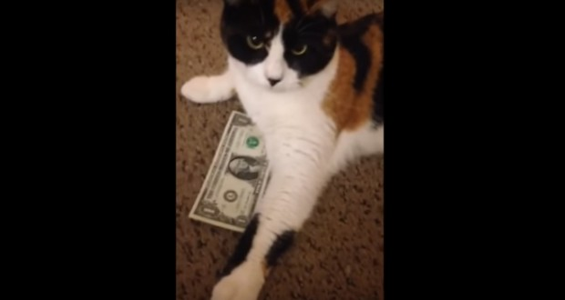 This Frugal Cat Is Determined To Protect His Savings - Video