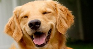 Reggae, soft rock best at relaxing stressed out dogs: study