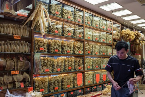 The dried maws of the critically endangered totoaba fish, like those pictured with shark fins in Hong Kong, sell for thousands of dollars on the black market in Asia. Photo: Anthony Wallace/Getty Images
