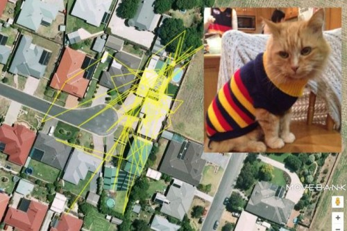 PHOTO: Rusty the Cat from Mount Gambier has also been profiled, along with his GPS tracking data. (Supplied: Discovery Circle)