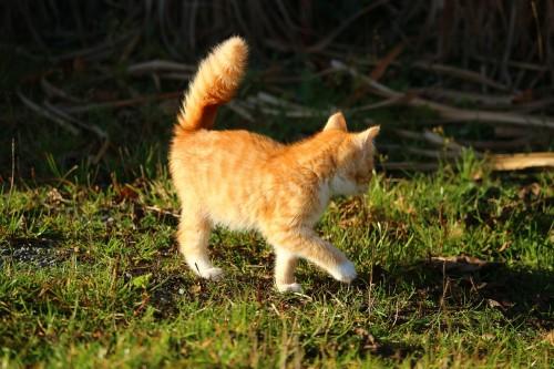 cat-1064100_1280