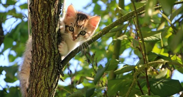 Cat Tracker Reveals Felines' Unknown Adventures