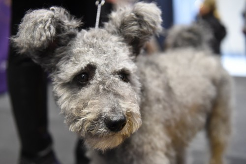 US-WESTMINSTER KENNEL CLUB-NEW BREEDS