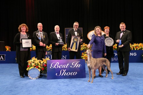 The National Dog Show Presented by Purina - 2016