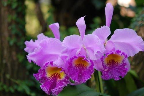 flower-768560_1280