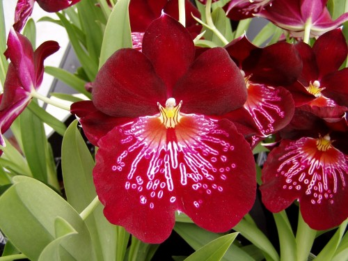 orchid-1202706_1280