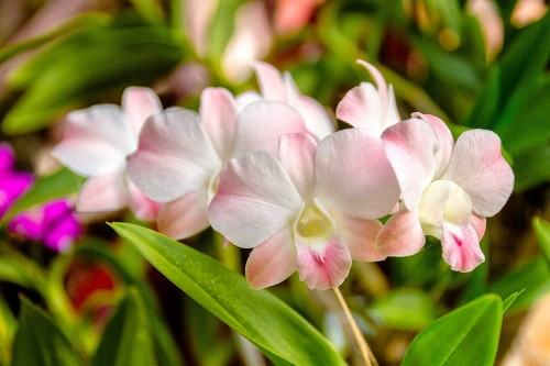 orchid-1594606_1280