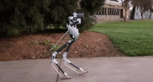 Meet Cassie, a Dynamic and Talented Robot Delivery Ostrich