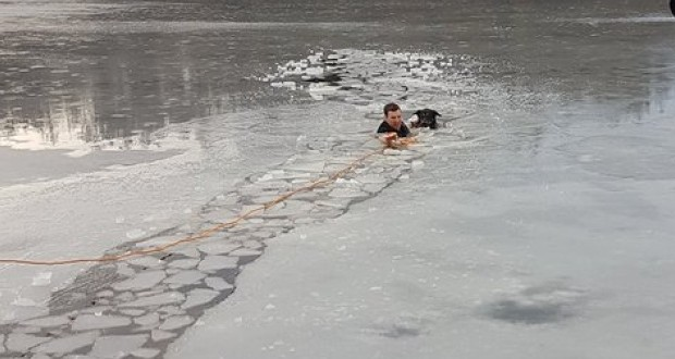 Police officer jumps into icy water to save dog