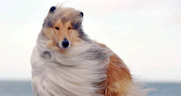 Brits Share Pictures Of Dogs Being Blown In The Wind By Storm Doris