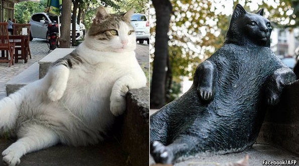 In Istanbul, fat cats are a good thing