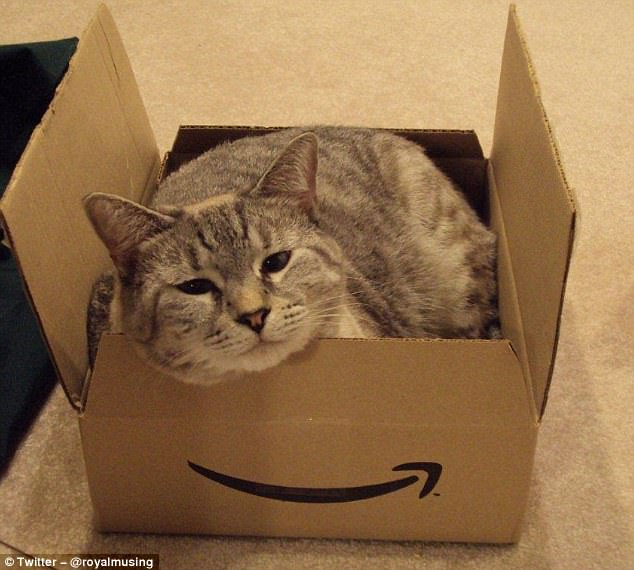 3E42C40200000578-4312742-While_a_human_gets_a_book_delivered_a_cat_finds_a_brand_new_home-m-74_1489504644133