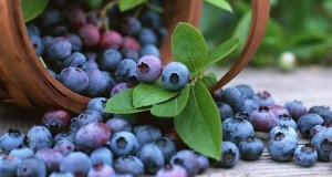 Blueberries eliminate baby blues by protecting 'happy hormones' in the brain - study finds