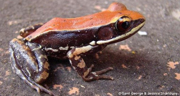 A rare frog can help find cure for the flu