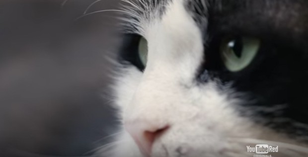 YouTube Acquires Turkish Street Cats Documentary Film 'Kedi' for YouTube Red